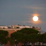 fiorga69